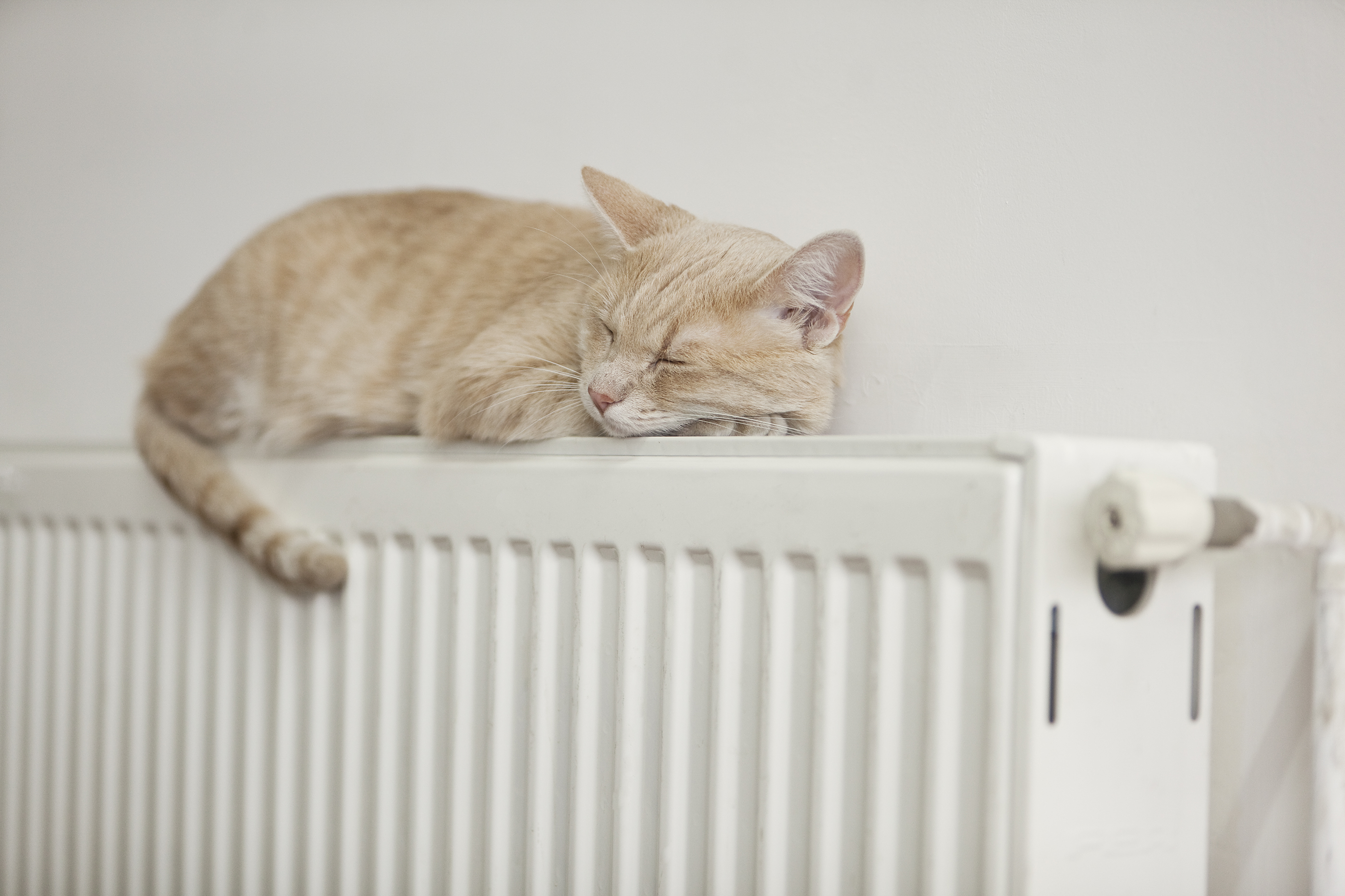 Kitten on radiator heating solutions