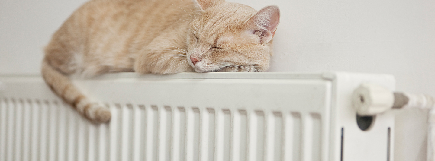 Cosy cat on radiator - heating solutions
