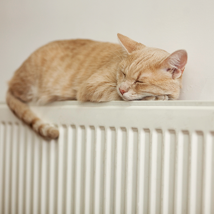Cat asleep on gas powered radiator