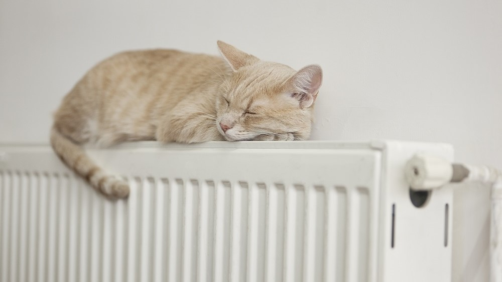 Kitten on radiator warmed by gas heating